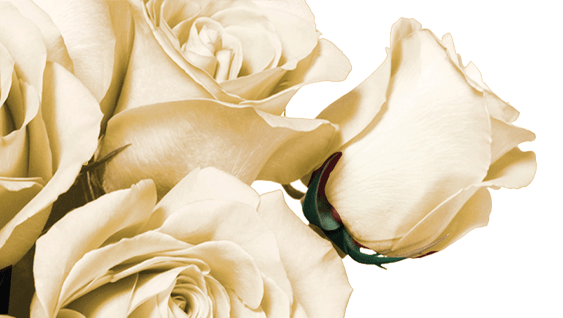 Only <br>The Best Roses Image